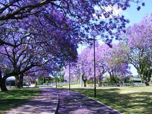 purple-street