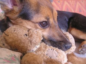dog-with-bear