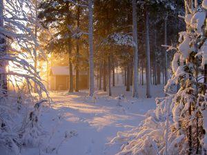 sun-in-snow